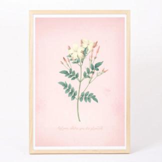 Free Jasmine Art Print